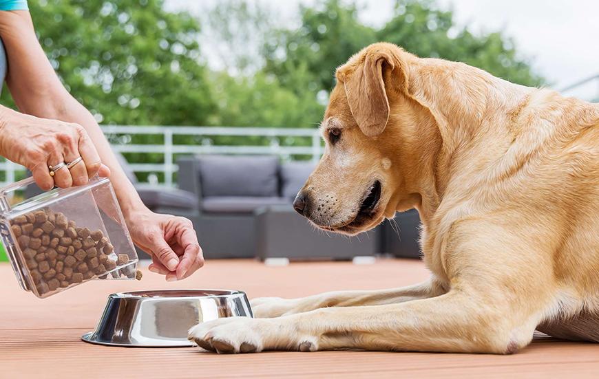 Питание и уход для питомников собак крупных пород