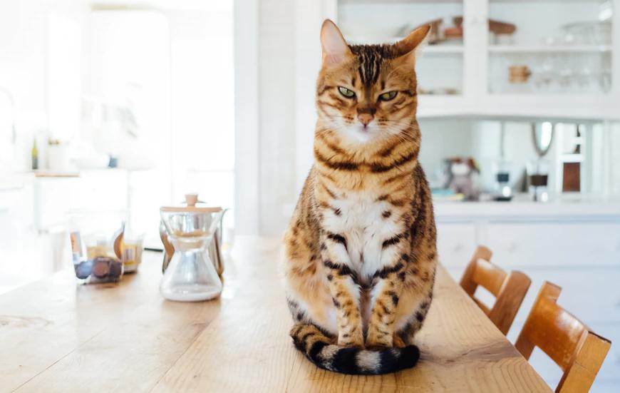 Как перевести кошку или кота на сухой корм?